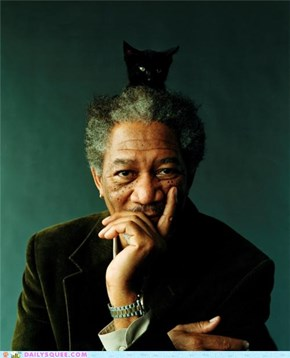 Acting Like Animals: KITTENS - A Documentary Narrated by Morgan Freeman