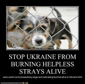 STOP UKRAINE FROM BURNING HELPLESS STRAYS ALIVE