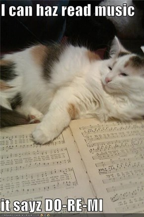 I can haz read music  it sayz DO-RE-MI