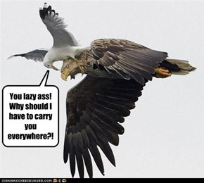 You lazy ass! Why should I have to carry you everywhere?!