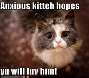 Anxious kitteh hopes  yu will luv him!