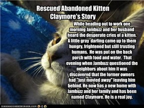 Rescued Abandoned Kitten Claymore's Story