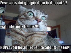 Eww wats dat googie doin to dat cat?!! wat internetz tis dis?!! HOWz you be approved to adoptz meee?!