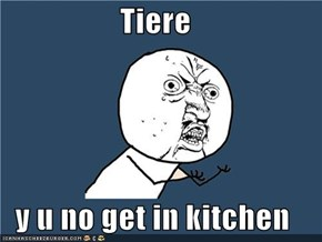 Tiere  y u no get in kitchen