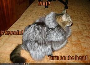 Wut? Iz Freezin! Turn on the heat!