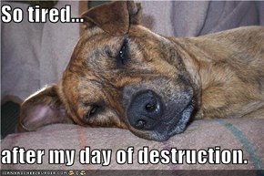 So tired...  after my day of destruction.