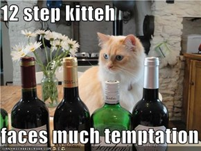 12 step kitteh  faces much temptation