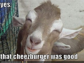 yes,   that cheezburger was good