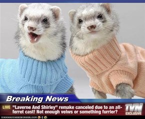 "Breaking News - ""Laverne And Shirley"" remake canceled due to an all-ferret cast! Not enough veiws or something furrier?"