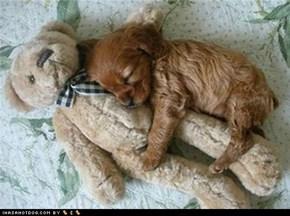 Sleepin wif mah teddeh