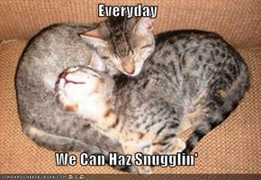 Everyday  We Can Haz Snugglin'