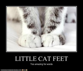 LITTLE CAT FEET