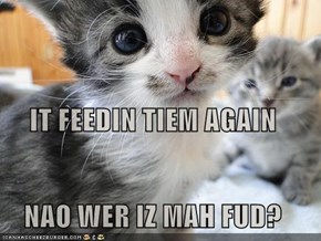 IT FEEDIN TIEM AGAIN NAO WER IZ MAH FUD?