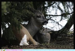 Better Than Bambi and Thumper IRL