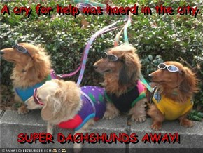 A cry for help was haerd in the city.  SUPER DACHSHUNDS AWAY!