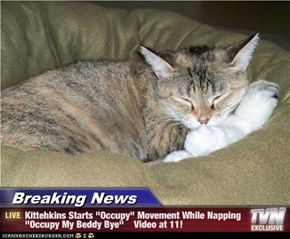 "Breaking News - Kittehkins Starts ""Occupy"" Movement While Napping ""Occupy My Beddy Bye""    Video at 11!"