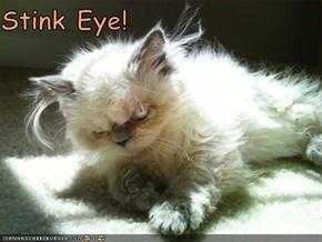 Stink Eye!