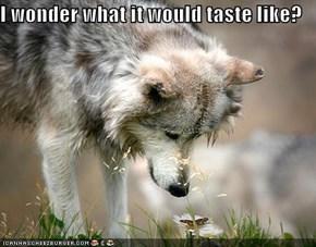 I wonder what it would taste like?