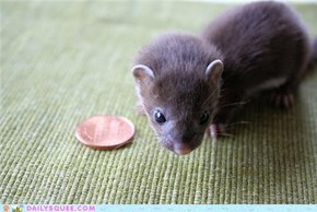 Squee Spree: Photographed to Scale