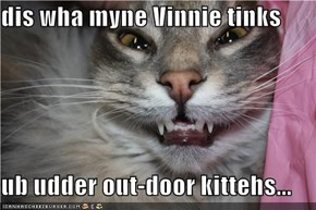 dis wha myne Vinnie tinks  ub udder out-door kittehs...