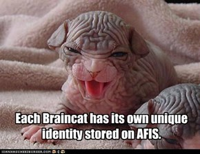Each Braincat has its own unique identity stored on AFIS.