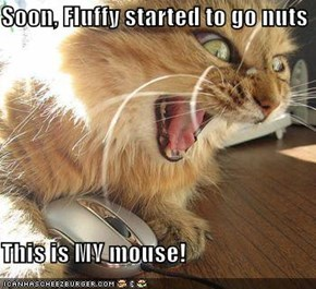 Soon, Fluffy started to go nuts  This is MY mouse!