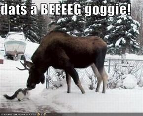 dats a BEEEEG goggie!
