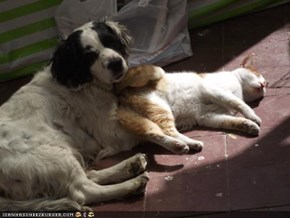 Goggies R Owr Friends: Iz Nawt Shur Ai Liek Mah Noo Butt Pillow...