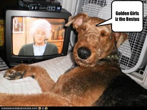 Can't get enough Golden Girls