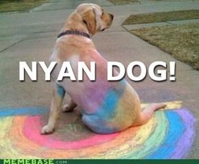Nyan Goggie!