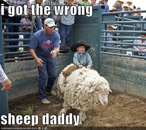 i got the wrong   sheep daddy