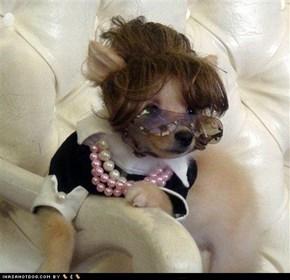 Sarah Palin Dog??