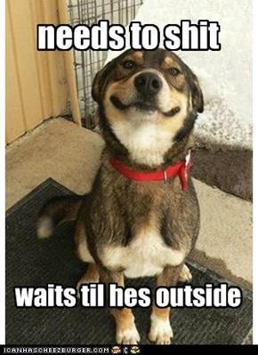 good dog greg doesnt go inside