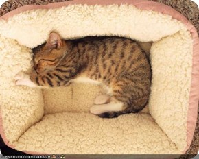 Cyoot Kitteh of teh Day: And Dis Bed Iz Juuusssssst Rite!