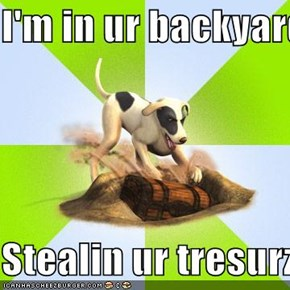 I'm in ur backyard  Stealin ur tresurz