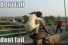 dont fall  dont fall