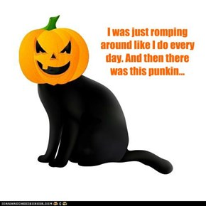 I was just romping around like I do every day. And then there was this punkin...