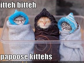 itteh bitteh  papoose kittehs