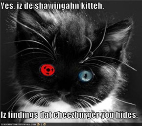 Yes, iz de shawingahn kitteh.  Iz findings dat cheezburger you hides.