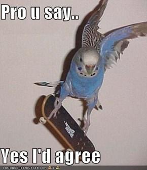 Pro u say..  Yes I'd agree