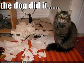 the dog did it.......