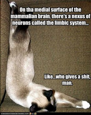 On tha medial surface of the mammalian brain, there's a nexus of neurons called the limbic system...