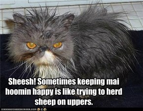 Sheesh! Sometimes keeping mai hoomin happy is like trying to herd sheep on uppers.