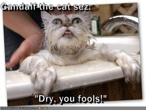 "Gandalf the cat sez:  ""Dry, you fools!"""