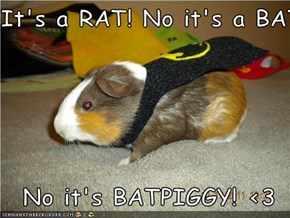 It's a RAT! No it's a BAT!   No it's BATPIGGY! <3