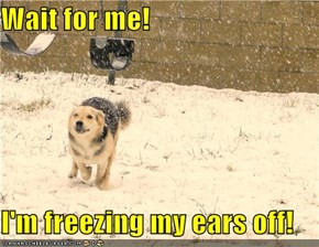 Wait for me!  I'm freezing my ears off!