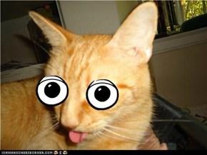 CRAZY CAT!!!