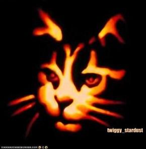 twiggy_stardust