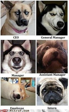 "Corporate Hierarchy, Now in ""Has a Hotdog"" Form"