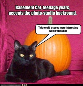 Basement Cat, teenage years, accepts the photo-studio backround.